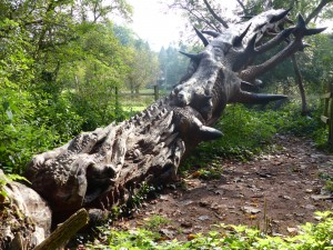 fallen tree dragon sculpture, edge of Wyre Forest, Worcs
